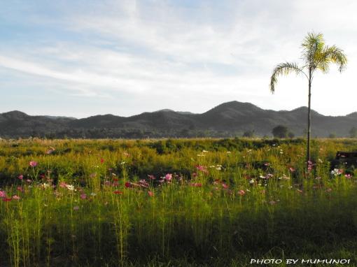 Sapan Pai Flower Field