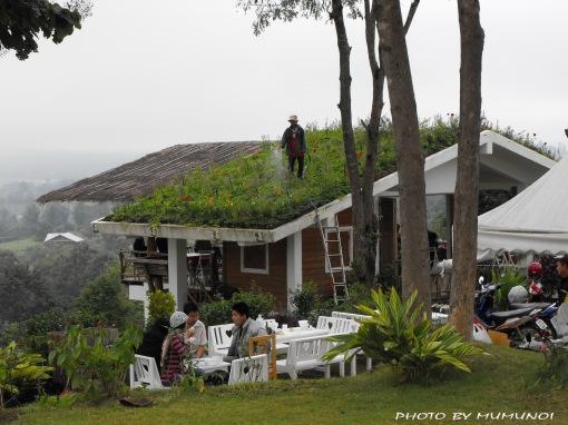 Lovely garden on the roof