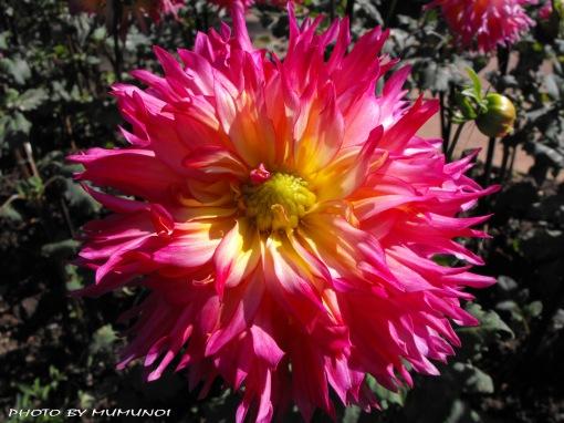 Flora in Mae Fah Luang Royal Project (Suan Mae Fah Luang)